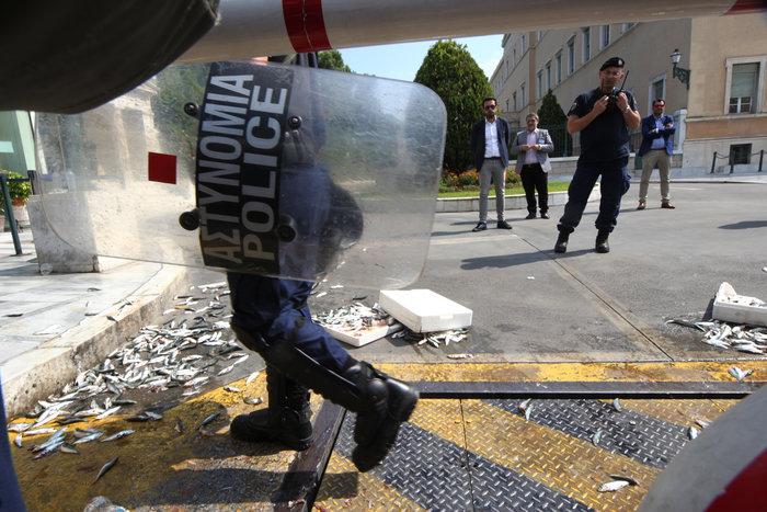 Διαδηλωτές του ΠΑΜΕ πέταξαν σαρδέλες στο προαύλιο της Βουλής (φωτό) - εικόνα 2