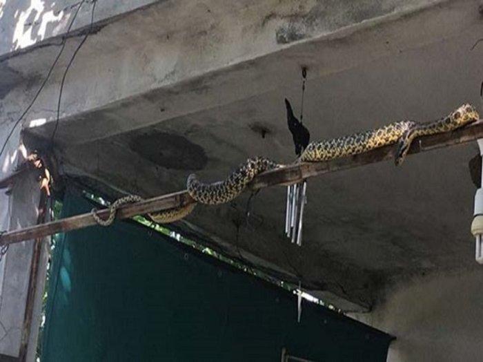 Γέμισε με φίδια η Σμύρνη - Πώς συνδέονται με τον μεγάλο σεισμό (ΦΩΤΟ)