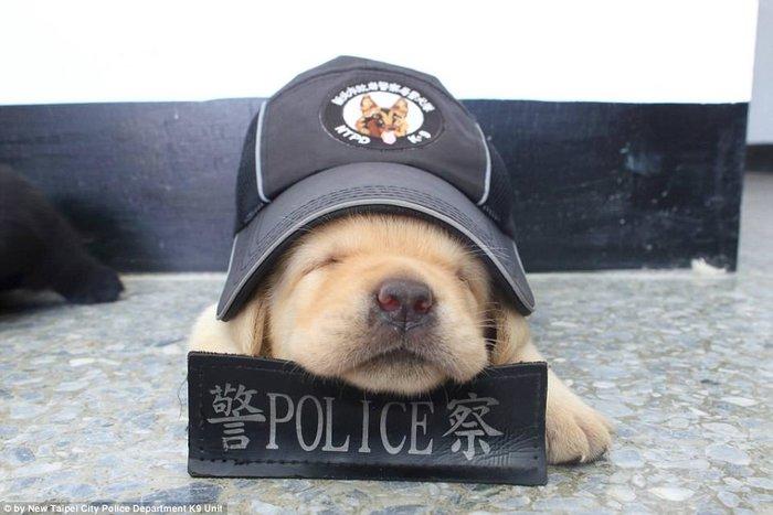 Αυτός ειναι ο πιο αξιαγάπητος αστυνομικός σκύλος του κόσμου
