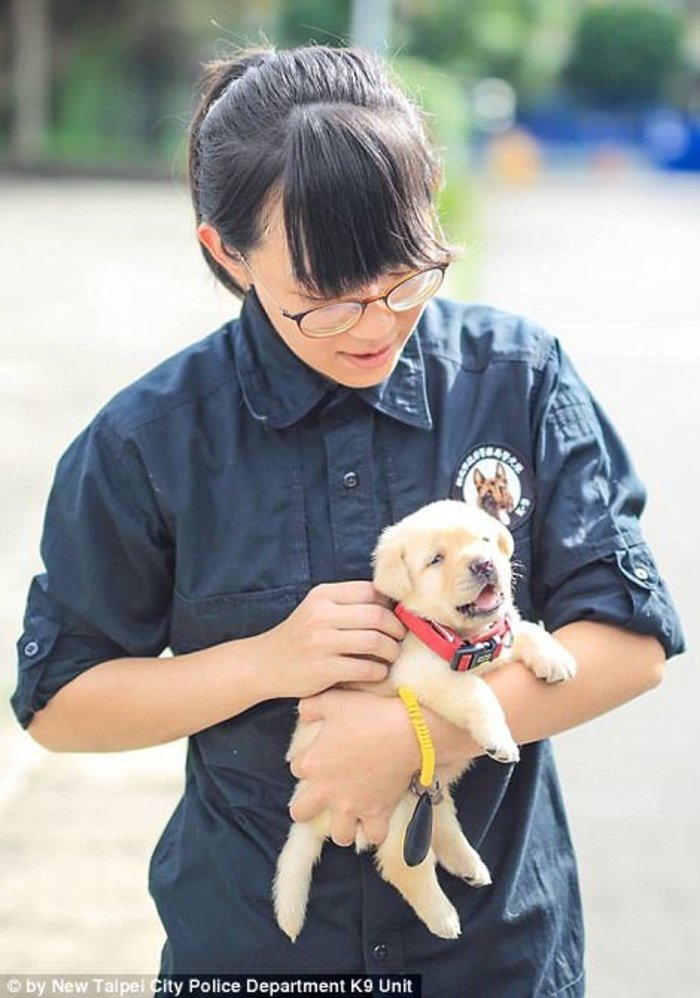 Αυτός ειναι ο πιο αξιαγάπητος αστυνομικός σκύλος του κόσμου - εικόνα 2