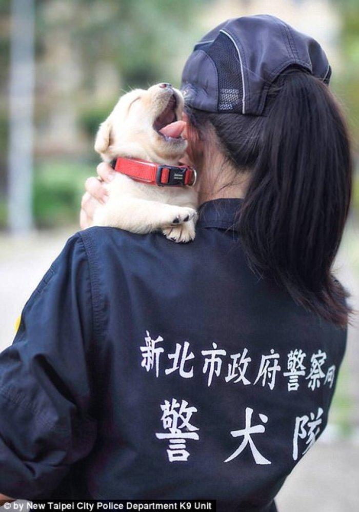 Αυτός ειναι ο πιο αξιαγάπητος αστυνομικός σκύλος του κόσμου - εικόνα 3