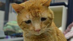 Αυτός είναι ο πιο λυπημένος γάτος στον κόσμο
