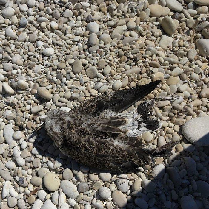 Η κόρη του Γουίλ Σμιθ έβγαλε 22 σακούλες σκουπίδια από ελληνικές παραλίες - εικόνα 7