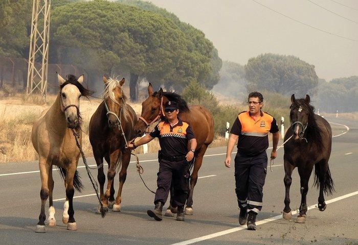 Κόλαση φωτιάς στη Ν. Ισπανία - Εγκλωβισμένοι 50.000 άνθρωποι - εικόνα 3
