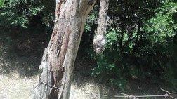 """Φίδι-""""ανακόντα"""" 2.5 μέτρων αναστάτωσε χωριό στα Άγραφα! -φωτό"""