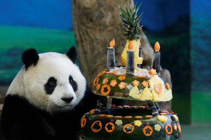 Το γιγαντιαίο πάντα γιορτάζει τα γενέθλιά του - εικόνα 2