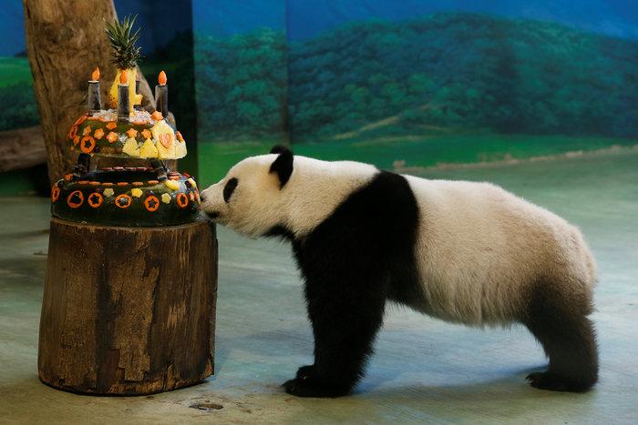 Το γιγαντιαίο πάντα γιορτάζει τα γενέθλιά του
