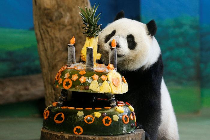 Το γιγαντιαίο πάντα γιορτάζει τα γενέθλιά του - εικόνα 3