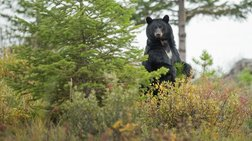 ΗΠΑ: Ξύπνησε επειδή τον δάγκωνε μια αρκούδα