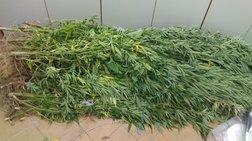 Συνελήφθησαν δημόσιοι υπάλληλοι που καλλιεργούσαν χασίς στο Παναιτώλιο