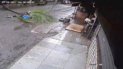 Βίντεο σοκ: Ακαριαίος θάνατος γυναίκας από πτώση φοίνικα