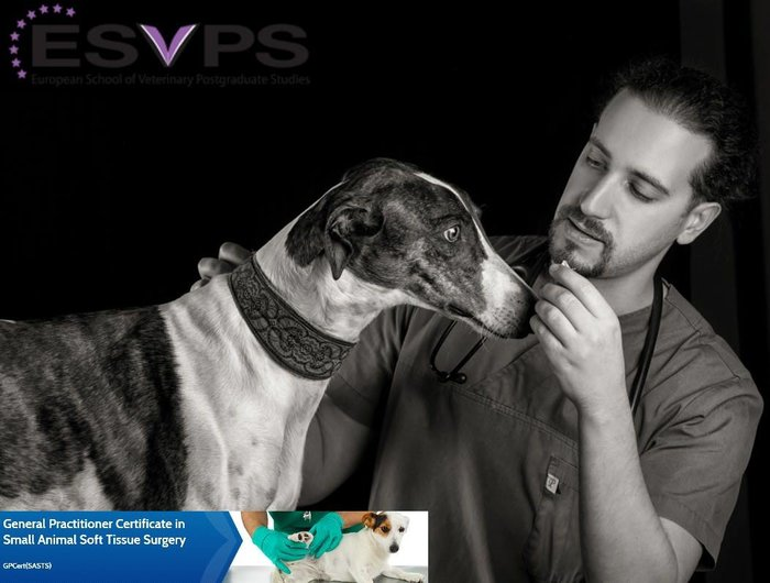 Ο Ελληνοϊταλός κτηνίατρος που σώζει αδέσποτα στον Βόλο