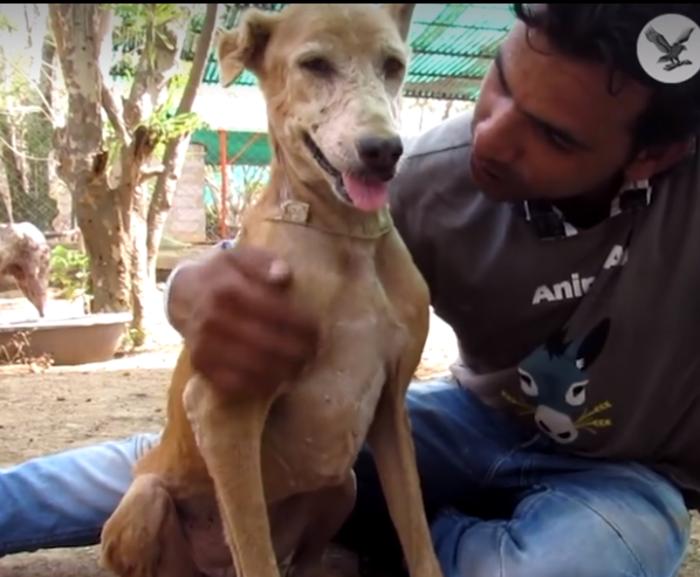 Εδωσαν ζωή σε σκύλο που ήταν ετοιμοθάνατος - εικόνα 3