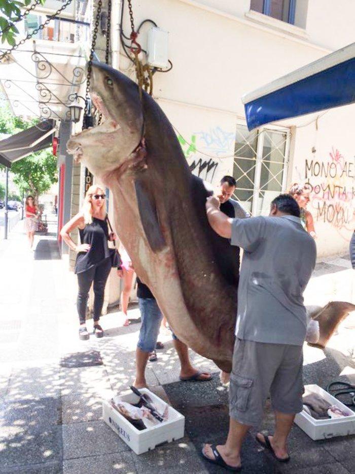 Απίστευτο: Έπιασαν καρχαρία 300 κιλών στην Κεφαλονιά