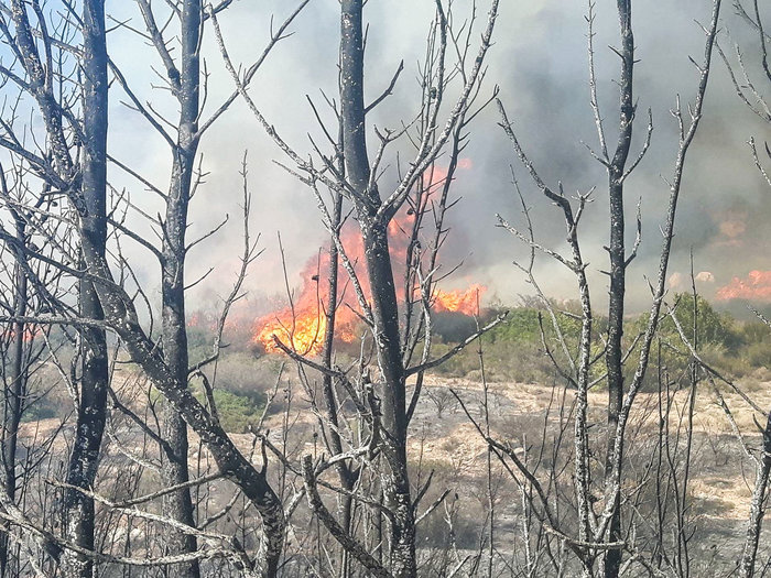 Υπό έλεγχο η μεγάλη πυρκαγιά στις Σπέτσες [ΕΙΚΟΝΕΣ]