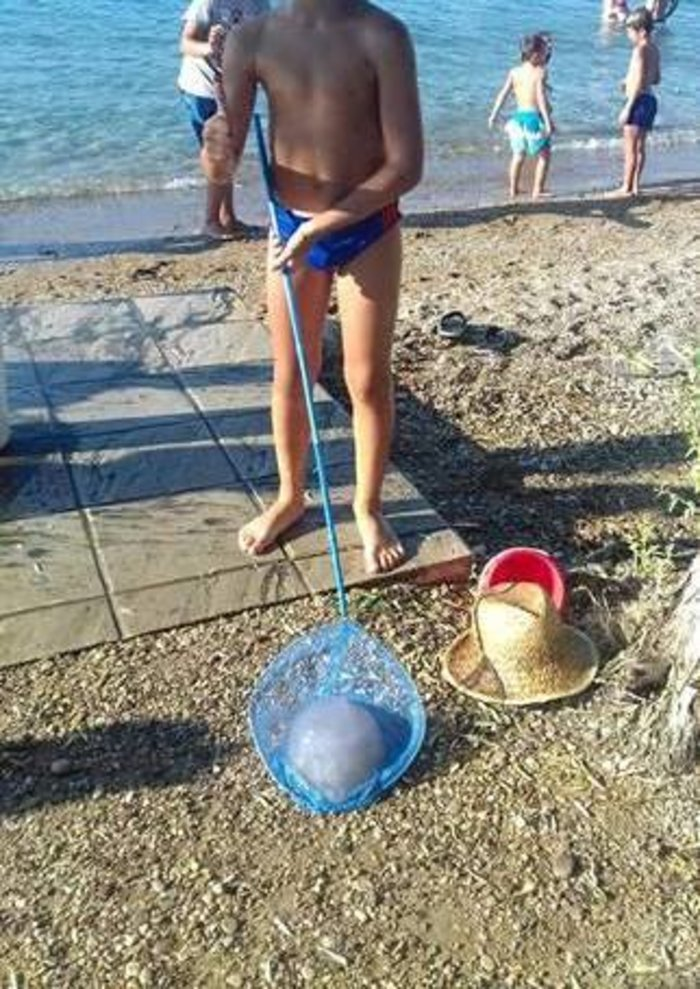 Ψάρεψαν μέδουσα 5 κιλών στην παραλία της Ακολης στην Αχαΐα