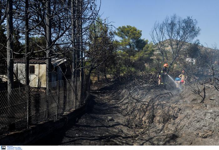 Υπό έλεγχο η φωτιά στη Λέσβο - Κάηκαν σπίτια στο Λαγονήσι - εικόνα 4