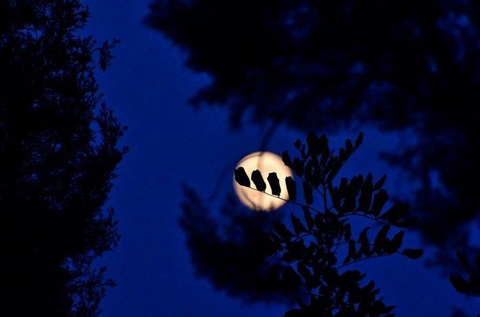 Εικόνες από την ξεχωριστή & εντυπωσιακή πανσέληνο με μερική έκλειψη σελήνης - εικόνα 6