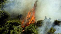 Υπό έλεγχο οι πυρκαγιές στην Τζια και στο Ζέλι Αταλάντης