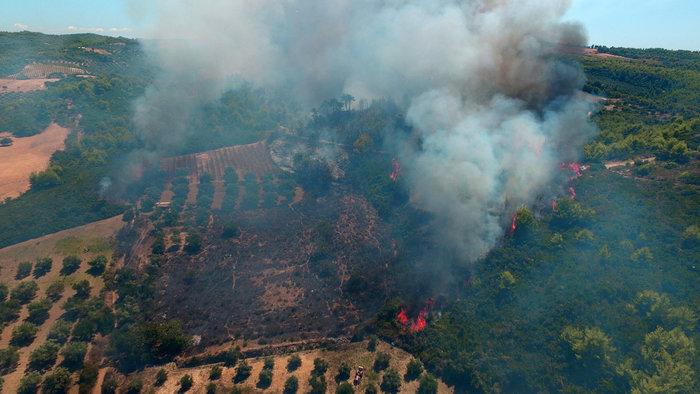 Τέσσερα τα μέτωπα της φωτιάς αυτή τη στιγμή στην Ηλεία - εικόνα 3