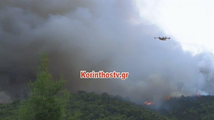 Περιορίστηκε η φωτιά σε δασική έκταση στο Ρυτό Κορινθίας (φωτό) - εικόνα 6