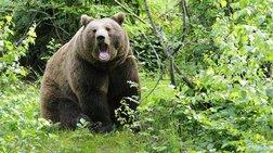 Κυνηγός στη Φλώρινα τραυματίστηκε από επίθεση αρκούδας