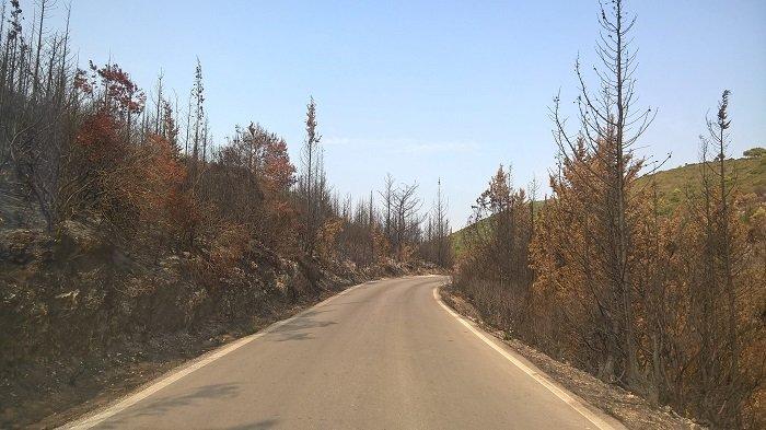 Το δάσος στα χωριά της Ζακύνθου: Πριν & μετά τη φωτιά (ΦΩΤΟ) - εικόνα 3