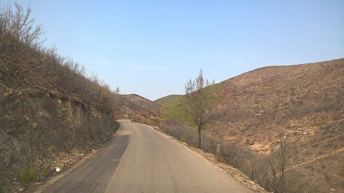 Το δάσος στα χωριά της Ζακύνθου: Πριν & μετά τη φωτιά (ΦΩΤΟ) - εικόνα 5