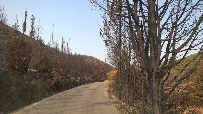 Το δάσος στα χωριά της Ζακύνθου: Πριν & μετά τη φωτιά (ΦΩΤΟ) - εικόνα 7