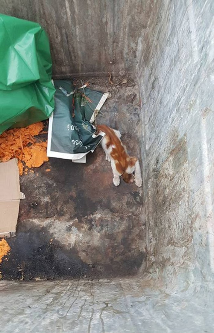Βάρη: Επεισοδιακός απεγκλωβισμός γάτας από κάδο σκουπιδιών - εικόνα 2