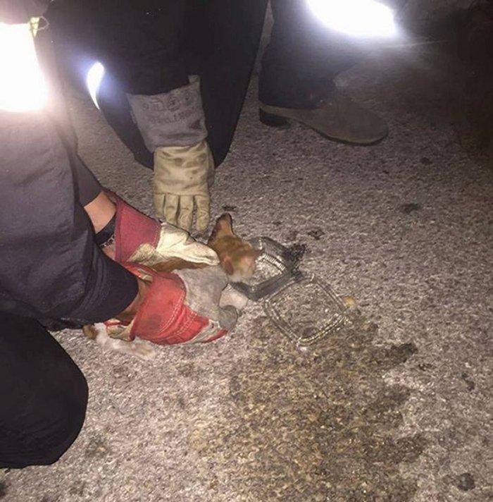 Βάρη: Επεισοδιακός απεγκλωβισμός γάτας από κάδο σκουπιδιών - εικόνα 4