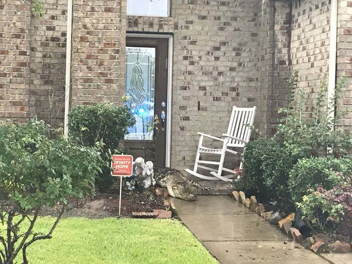 O τυφώνας Χάρβεϊ έβγαλε ως και τους... κροκόδειλους στο δρόμο!