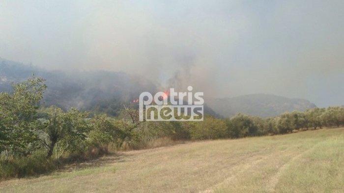 Νέα δασική πυρκαγιά στο γεράκι Αμαλιάδας (ΒΙΝΤΕΟ) - εικόνα 2