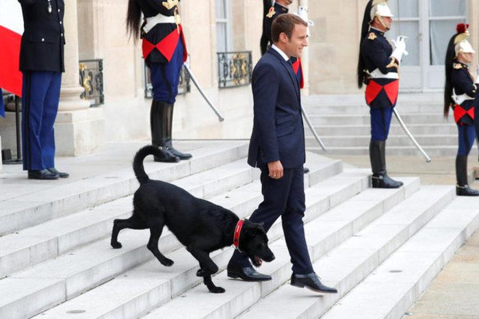 Μαύρο λαμπραντόρ έψαχνε τον Μακρόν στο χώρο του Υπουργικού! - εικόνα 2