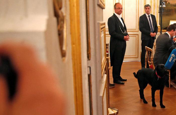 Μαύρο λαμπραντόρ έψαχνε τον Μακρόν στο χώρο του Υπουργικού! - εικόνα 4