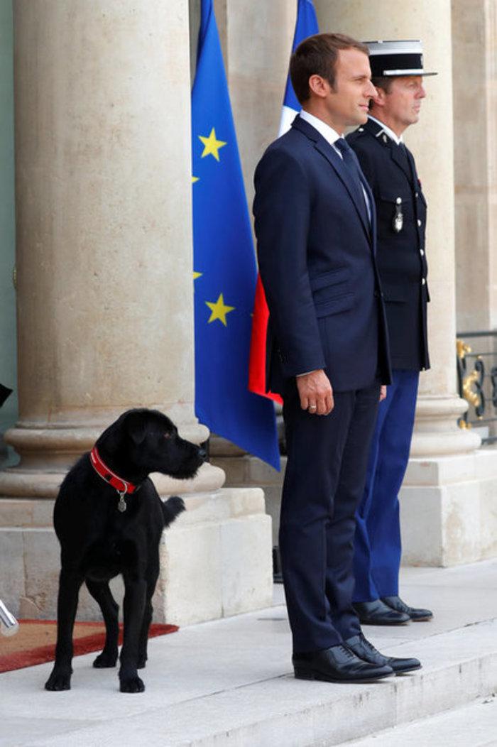 Μαύρο λαμπραντόρ έψαχνε τον Μακρόν στο χώρο του Υπουργικού! - εικόνα 7
