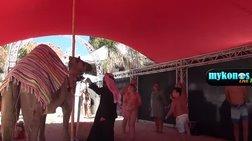 """Εικόνες """"κιτς"""" - Έφεραν και καμήλες για τη συναυλία Ρέμου στο Nammos video"""