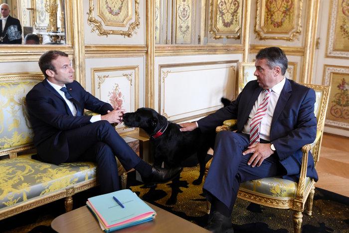 Τα μαύρα σκυλιά του Μακρόν & του Πούτιν και οι...γερμανοί - εικόνα 4