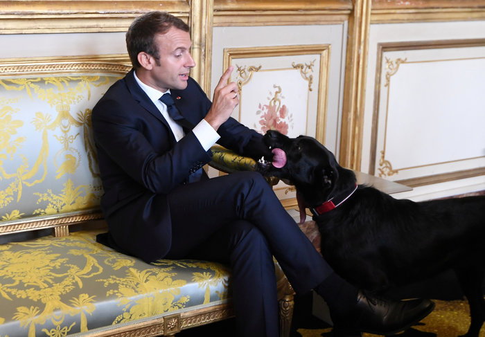 Τα μαύρα σκυλιά του Μακρόν & του Πούτιν και οι...γερμανοί - εικόνα 5