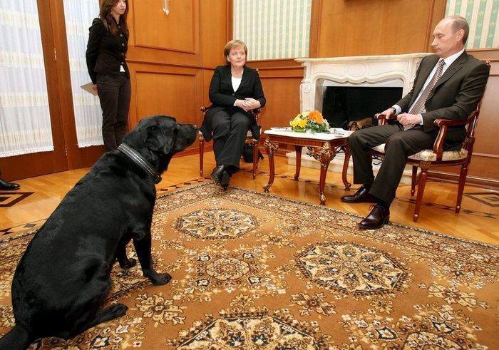 Τα μαύρα σκυλιά του Μακρόν & του Πούτιν και οι...γερμανοί - εικόνα 8