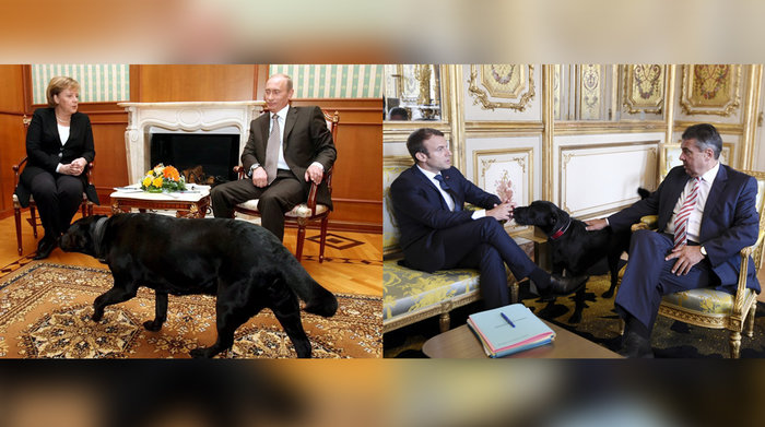 Τα μαύρα σκυλιά του Μακρόν & του Πούτιν και οι...γερμανοί