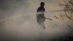 Πυρκαγιά ξέσπασε στην περιοχή Αλφειούσα της Ηλείας