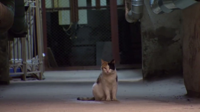 Διάσημες γάτες «ένοικοι» του Ερμιτάζ πέθαναν από ασφυξία - εικόνα 2