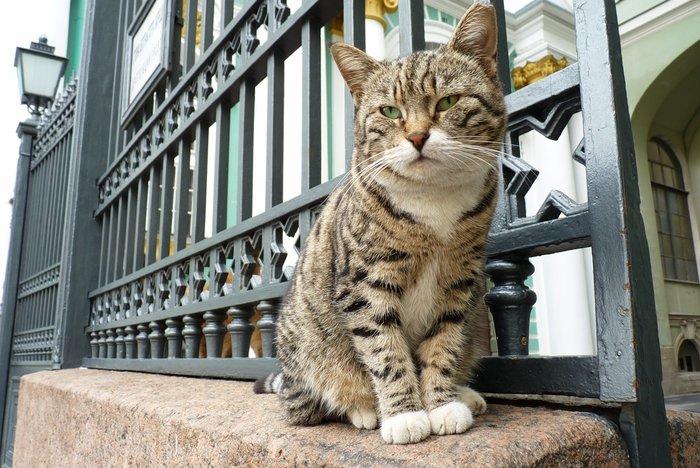Διάσημες γάτες «ένοικοι» του Ερμιτάζ πέθαναν από ασφυξία