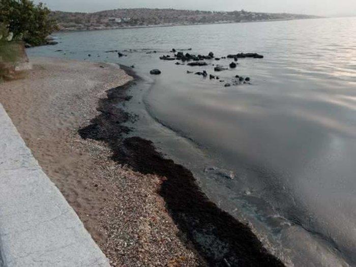 Μαύρισαν οι παραλίες στη Σαλαμίνα- συγκλονιστικές εικόνες - εικόνα 3