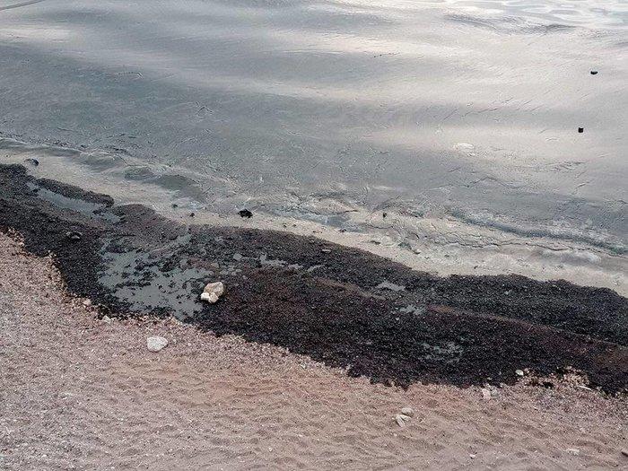 Μαύρισαν οι παραλίες στη Σαλαμίνα- συγκλονιστικές εικόνες - εικόνα 7
