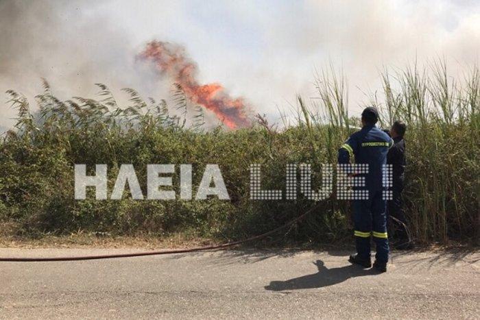 Ξέσπασε φωτιά στο Σκουροχώρι Ηλείας (ΦΩΤΟ) - εικόνα 2
