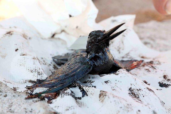 Σαλαμίνα: Φωτορεπόρτερ του Reuters βούτηξε στο μαζούτ για να σώσει μια ζωή - εικόνα 3