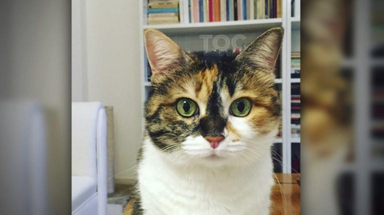 04f9f9f87605 Κουίζ  Ποια είναι η - διάσημη στην πολιτική ζωή - γάτα της φωτογραφίας