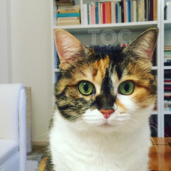 Κουίζ: Ποια είναι η - διάσημη στην πολιτική ζωή - γάτα της φωτογραφίας
